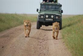 Serengeti,_Tanzania_(2336929627)