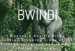 Bwindi National Park