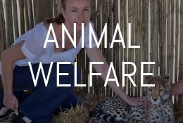 Animal Welfare (1)