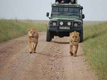 Serengeti_Tanzania_2336929627